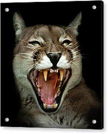 Wild Acrylic Print by Animus Photography