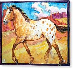 Wild Appaloosa Horse Acrylic Print by Jenn Cunningham