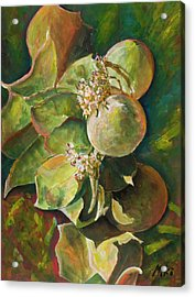 Wild Apples In Bloom Acrylic Print