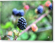 Wild Berries  Acrylic Print by JC Findley