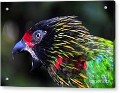 Wild Bird Acrylic Print by David Lee Thompson