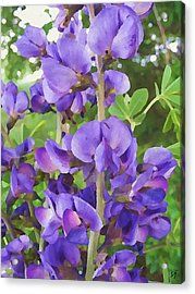 Wild Blue False Indigo Acrylic Print
