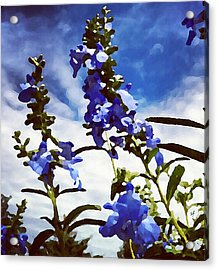 Acrylic Print featuring the digital art Wild Blue Sage  by Shelli Fitzpatrick