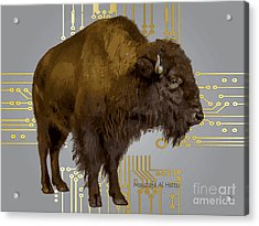 The American Buffalo Acrylic Print