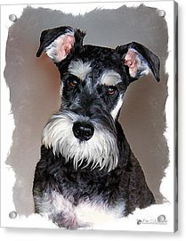 Wild Cody Wyo Acrylic Print by Tom Schmidt