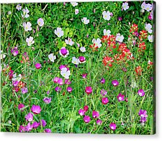 Acrylic Print featuring the photograph Wild Color Patch by Charles McKelroy