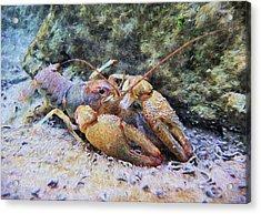 Wild Crawfish  Acrylic Print by JC Findley