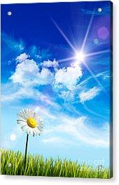 Wild Daisy In The Grass Against Bleu Sky Acrylic Print by Sandra Cunningham
