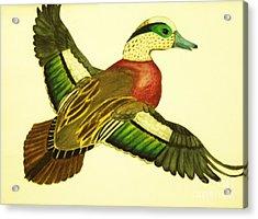 Wild Duck Acrylic Print by Jamey Balester