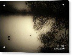 Wild Duckpond Acrylic Print by Ron Evans