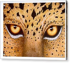 Wild Eyes Acrylic Print by Lorraine Foster