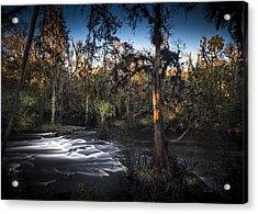 Wild Florida Acrylic Print by Marvin Spates