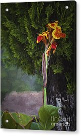 Wild Flower  ... Acrylic Print by Chuck Caramella