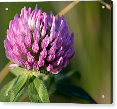 Wild Flower Bloom  Acrylic Print
