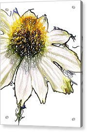 Acrylic Print featuring the photograph Wild Flower Five  by Heidi Smith