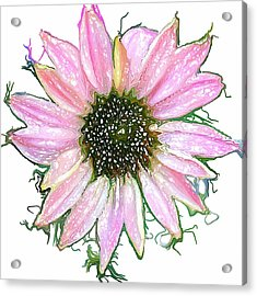 Acrylic Print featuring the photograph Wild Flower Four by Heidi Smith