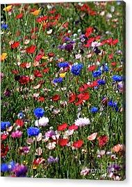 Wild Flower Meadow 2 Acrylic Print