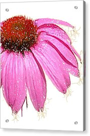 Acrylic Print featuring the photograph Wild Flower One  by Heidi Smith