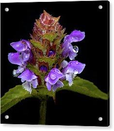 Wild Flower Portrait Acrylic Print