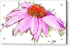 Acrylic Print featuring the photograph  Wild Flower Three by Heidi Smith
