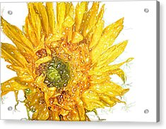 Acrylic Print featuring the photograph  Wild Flower Two  by Heidi Smith