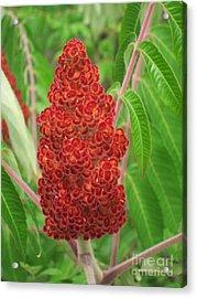 Wild Flowers 11 Acrylic Print