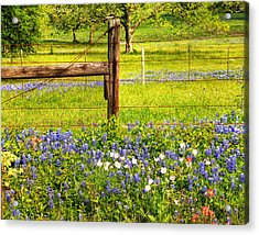 Wild Flowers And A Fence Acrylic Print