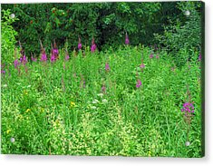 Wild Flowers And Shrubs In Vogelsberg Acrylic Print