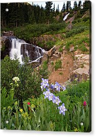 Acrylic Print featuring the photograph Wild Flowers And Waterfalls by Steve Stuller