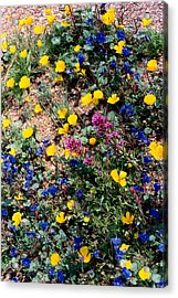 Wild Flowers Acrylic Print by Eliot LeBow