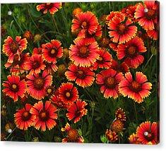 Wild Flowers In Field Color Art Print Acrylic Print by Randy Steele