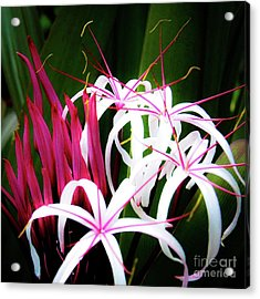 Acrylic Print featuring the photograph Wild Flowers In Hawaii by D Davila