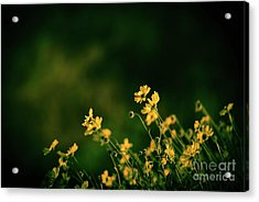 Acrylic Print featuring the photograph Evening Wild Flowers by Kelly Wade