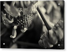 Wild Flowers Acrylic Print by Nicole Frischlich
