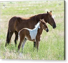 Acrylic Print featuring the photograph Wild Foal With A Horse Pattern  by Mary Hone