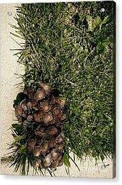 Wild Fungus Botany Hive  Acrylic Print by Steven Digman