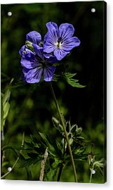 Acrylic Print featuring the photograph Wild Geraniums by Fred Denner