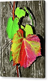 Acrylic Print featuring the photograph Wild Grape Vine By Kaye Menner by Kaye Menner