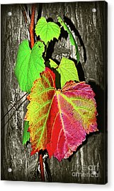 Acrylic Print featuring the photograph Wild Grape Vine II By Kaye Menner by Kaye Menner