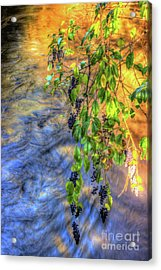 Wild Grapes Acrylic Print