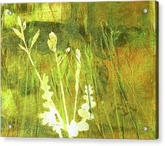 Wild Grass 7 Acrylic Print