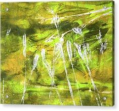 Wild Grass 9 Acrylic Print