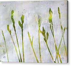 Wild Grass Series 1 Acrylic Print