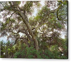 Acrylic Print featuring the photograph Wild Green Yonder by Alexander Kunz