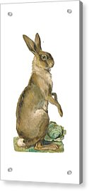 Acrylic Print featuring the digital art Wild Hare by ReInVintaged