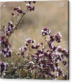 Wild Herbs  #herbs Acrylic Print