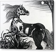 Wild Horse Acrylic Print by Bob Crawford