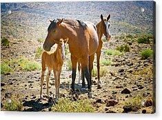 Wild Horse Family Acrylic Print