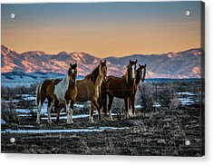 Acrylic Print featuring the photograph Wild Horse Group by Bryan Carter