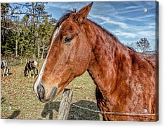 Acrylic Print featuring the photograph Wild Horse In Smoky Mountain National Park by Peter Ciro